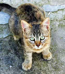 image of cat