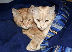 CatRescue cat image
