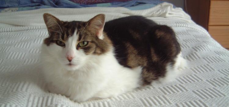 Libby Cat