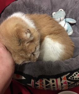 Harold is on board at CatRescue 901