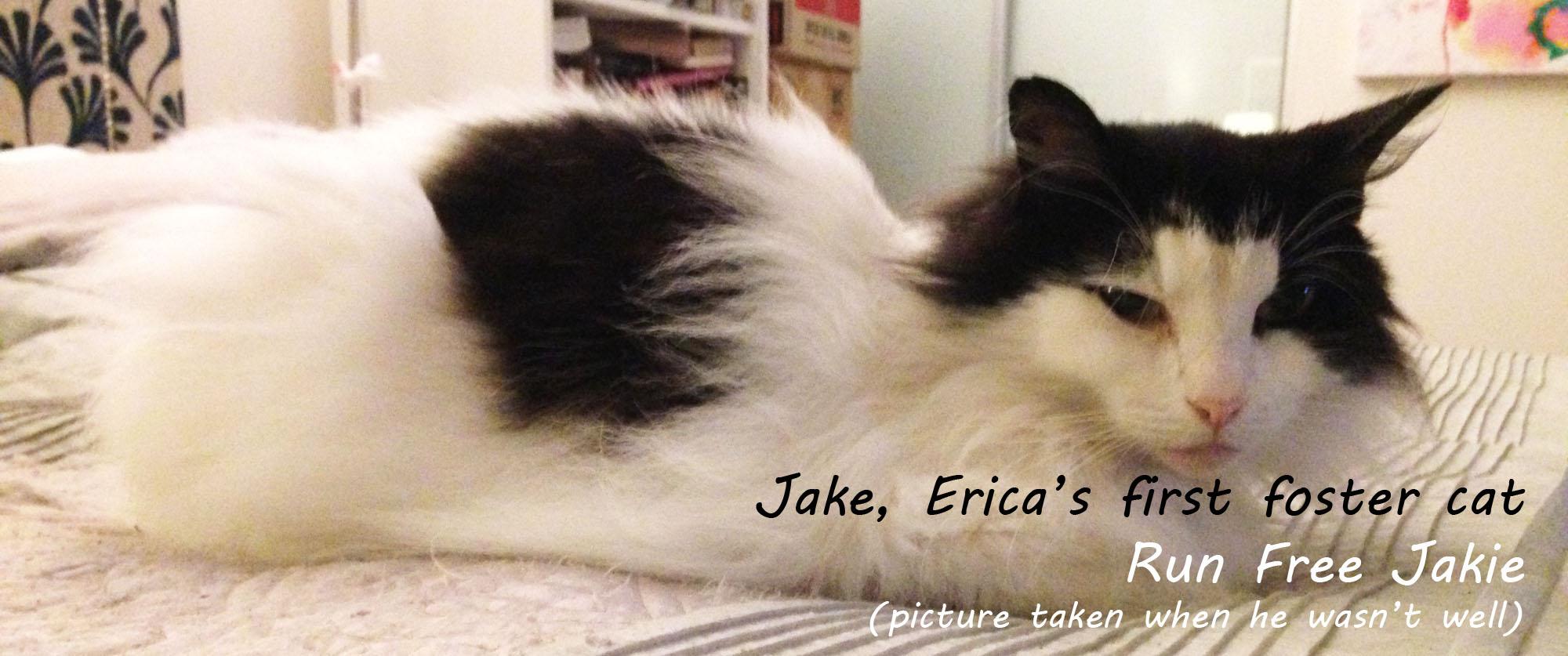 Jake, CatRescue 901 image