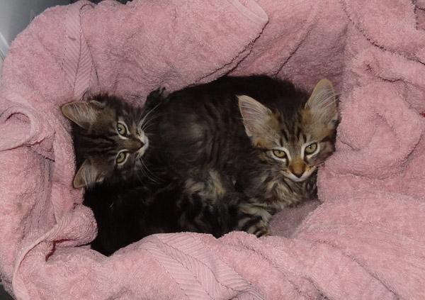 CatRescue image - Jake & Layla
