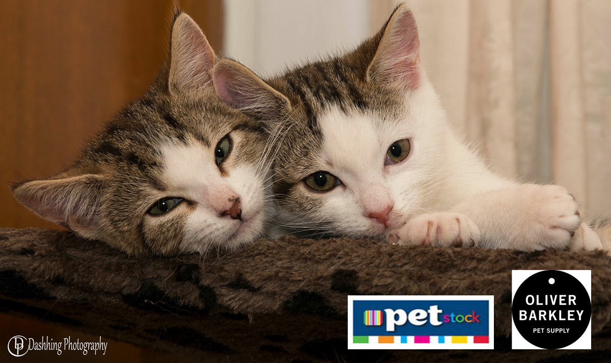CatRescue 901 rehoming cats