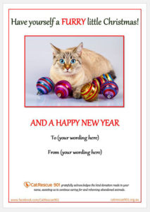 CatRescue 901 Gift Certificate image