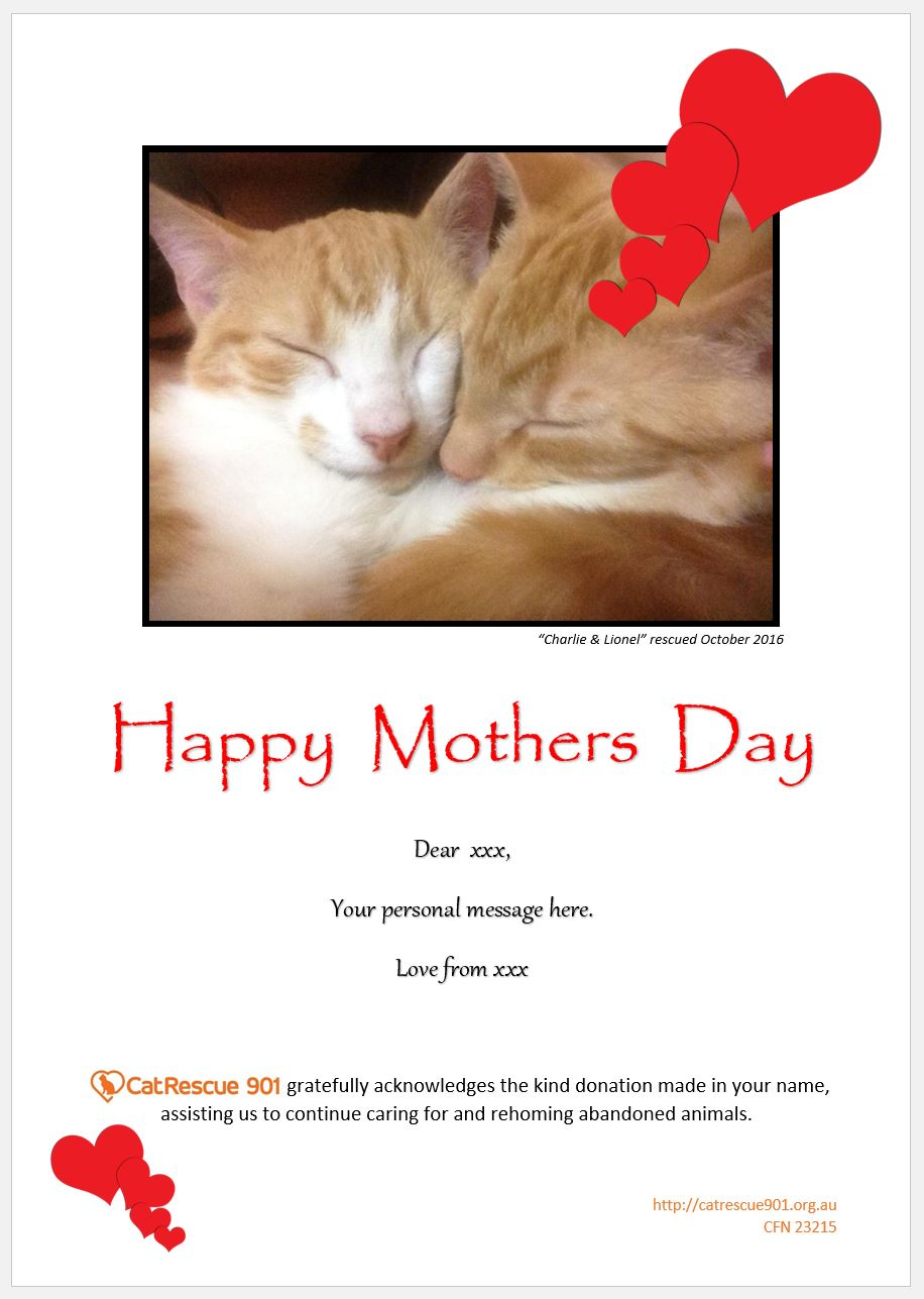 Gift Donation Certificates Catrescue 901