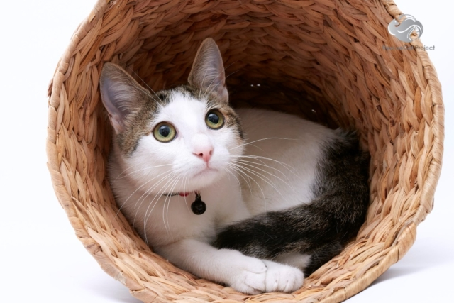 Tuppence, CatRescue 901 image